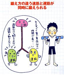 二種類の筋肉が同時に鍛えられる!画像